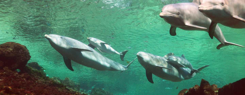 Hotel Hilton Waikoloa Village, Hawaii - Programma interattivo di Dolphin Quest